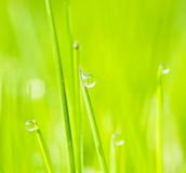 Grass. A drop on the grass Stock Image