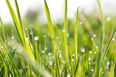 Grass. A drop on the grass Stock Photography