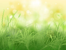 Grass. Nature background with green grass Stock Photography