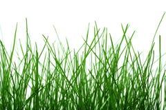 grass Στοκ Φωτογραφίες