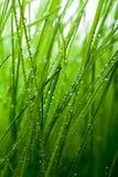 grass Στοκ εικόνα με δικαίωμα ελεύθερης χρήσης