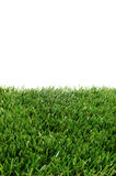 Grass. Closeup of grass on a white background Stock Images