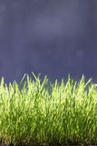 Grass. Green grass royalty free stock images