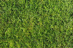 Grass. Photograph of grass photographed from above Royalty Free Stock Image