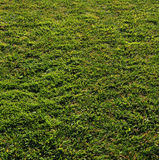Grass-221 Stock Photos
