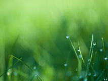 Grass. With dew drops on blur background Stock Images