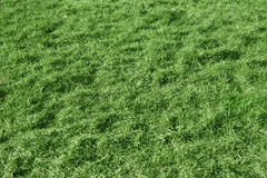 Grass. Green grass - a background on a glade Stock Photography
