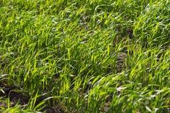 Grass. Some green grass texture in summer Stock Photo