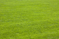 Grass. (in a parc of Pisa - Italia Royalty Free Stock Photography