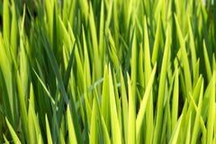 Grass Stock Photos