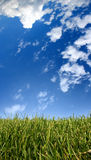 Grass. Clouds and blue sky Royalty Free Stock Photos