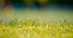 Grass. A high resolution macro shot of grass royalty free stock photography