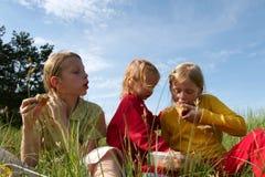 In the grass Stock Photos