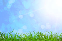 Grass. Green grass  on the sky backgrounds Royalty Free Stock Images