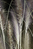 Grass. Dried grass against a blurred background Royalty Free Stock Image