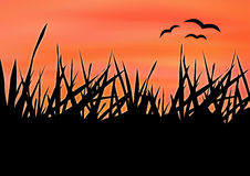 Grass. The tall grass at sunset Stock Photos