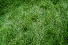 Grass. Fresh green grass background in Spring Stock Images