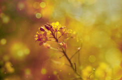 Grass. Beautiful grass with blur background Royalty Free Stock Images