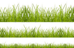 Grass. Green grass isolation on the white backgrounds Stock Photo