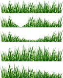 Grass. Illustration of isolated green grass royalty free illustration