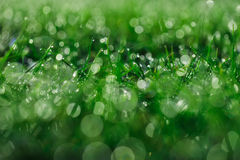 Grass. Background with beautiful colours and bliks Royalty Free Stock Photography