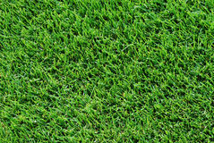 Grass. Perfect cut green golf grass. You see only the lawn, could be used as background stock photo