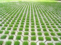 Grass. The sidewalk from the fresh grass Stock Photos