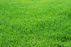 Grass. Perfect cut green golf grass. You see only the lawn, could be used as background royalty free stock photos