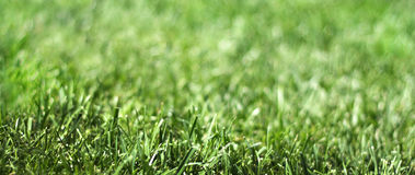 Free Grass Stock Photo - 29967730
