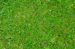 Grass 3 Stock Photos
