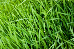 Free Grass Stock Photo - 30123930