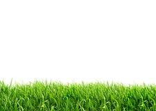 Free Grass Stock Image - 30444681