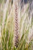 Grass. Grain of grass Stock Image