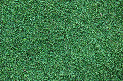 Grass. A background/texture of green grass royalty free stock photography
