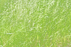Grass. Close-up of green grass stock image