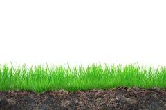Free Grass Royalty Free Stock Image - 32622366
