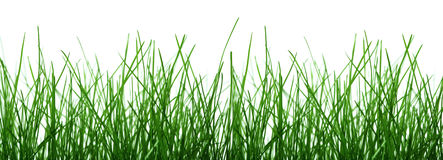 Free Grass Royalty Free Stock Image - 3308736