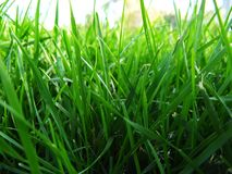 Grass. Green grass close up background Stock Images