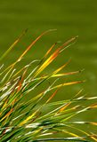 Grass Royalty Free Stock Photo