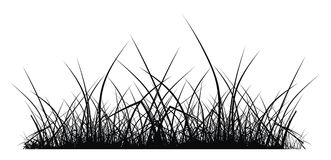 Grass. Vector silhouette of grass on white background Stock Photography