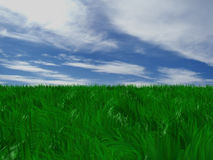 The grass Royalty Free Stock Photography