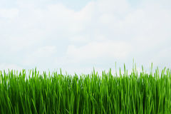 Free Grass Stock Photos - 3743423