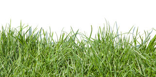Grass. Photo grass, grass on white background, grass in sunlight, part of the meadows, juicy grass, green grass Stock Photography