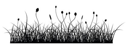Grass. Vector silhouette of grass on white background Royalty Free Stock Image