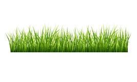 Free Grass Stock Photo - 41758380