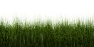 Grass. A 3d generated grass sample Stock Image