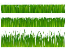 Grass. (lawn) on white background Stock Photography
