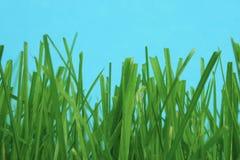 Among the grass Stock Image