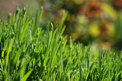 Grass. A close up of green grass stock image