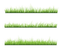 Grass. Isolated on white background,vector illustration Stock Image
